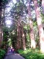 例の杉並木